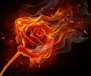 roseburning